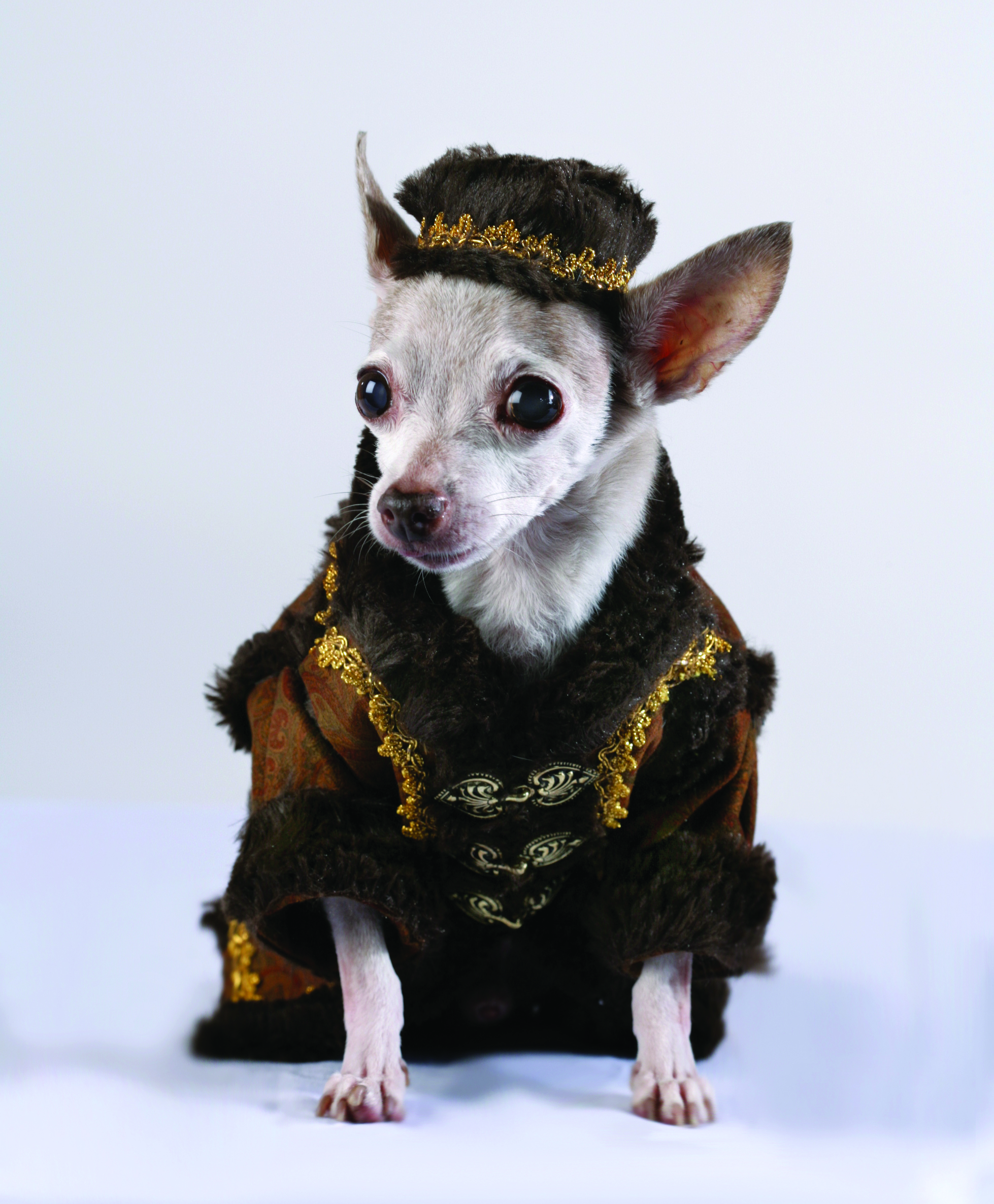 Fashion Outlook for Dog
